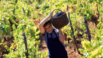 Grape production increased by 44.8% in 2018