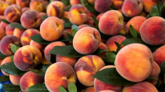 19 tons of Georgian peaches and nectarines not allowed to enter Russian market