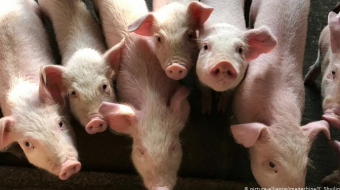 Italian authorities seize nearly 10 tons of infected Chinese pork
