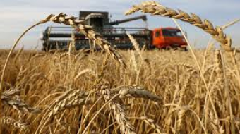 Russia Restricts Grain Exports Amid Pandemic
