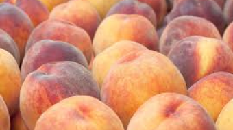 1,800 tonnes of peaches exported from Georgia