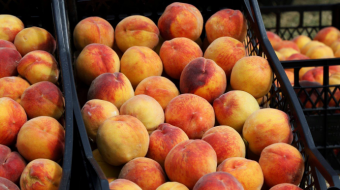 6,179 tons of peaches and nectarines exported from Georgia as of July 14