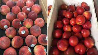 Georgia exported 2, 16,273 tons of peaches and nectarines as of August 3