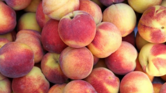 Georgia exported 25,070 tons of peaches and nectarines