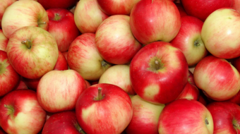 3 005 tons of apples worth $ 1.3 million exported from Georgia