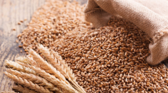 Russia considers  increasing wheat export tax