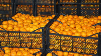 Georgia exported 35.4 thousand tons of tangerines from August 1, 2020 to January 17, 2021