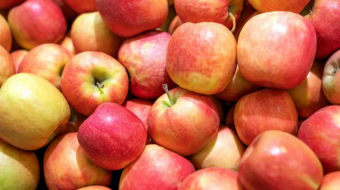 Georgia exported 11.2 thousand tons of apples