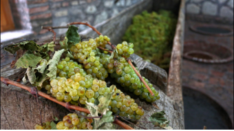National Wine Agency: Vintage has entered  an active phase in Kakheti, almost 40% of the crop is housed